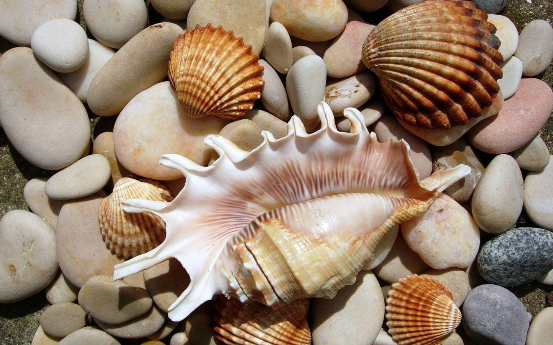 stones seashells wallpaper