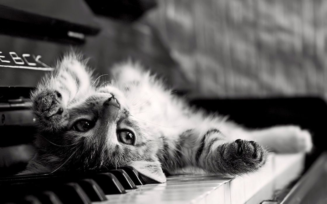 piano cats grayscale kittens wallpaper
