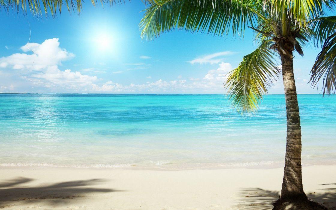 Nature Palm Trees Sea Beaches Wallpaper