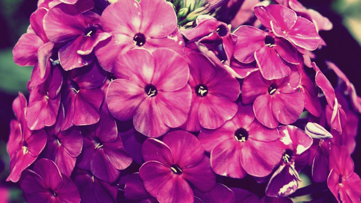 flowers vintage wallpaper