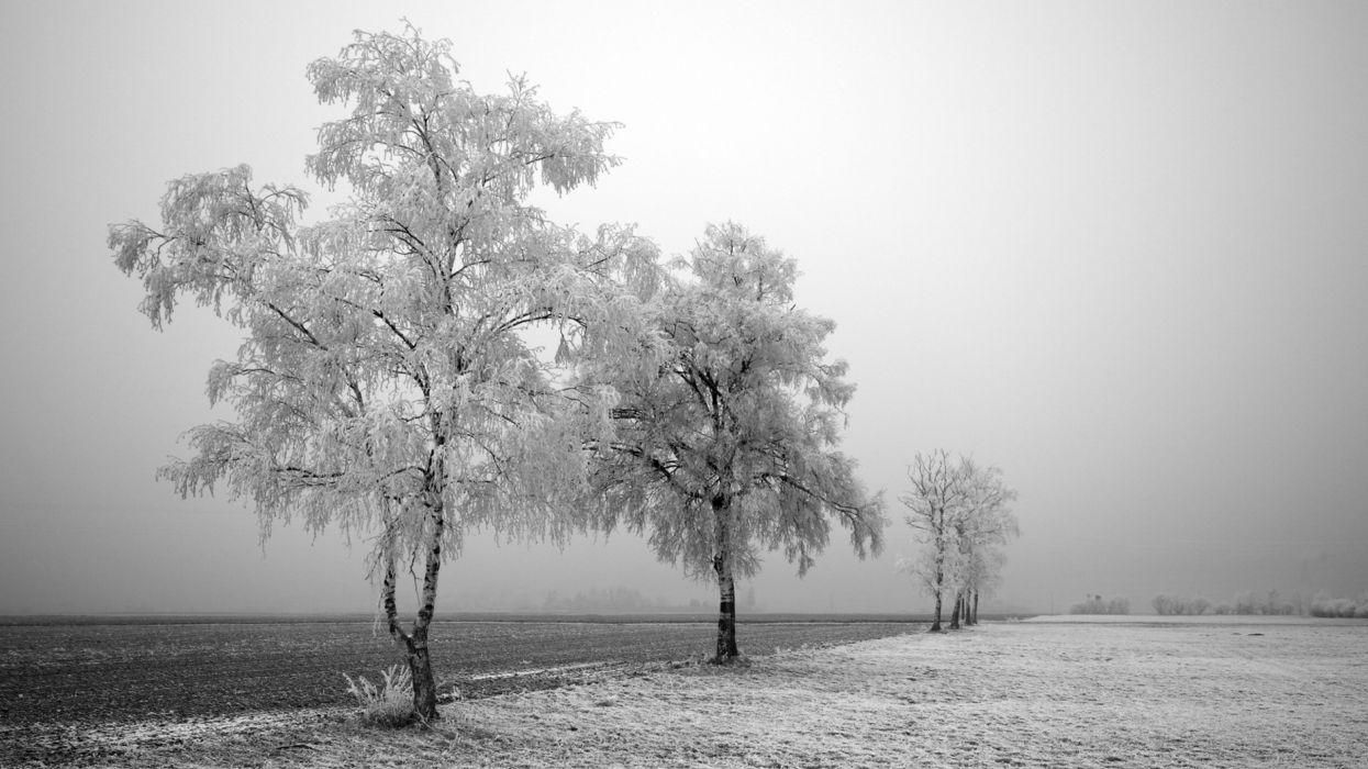 trees snow landscapes wallpaper