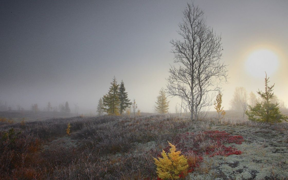 trees frost wallpaper