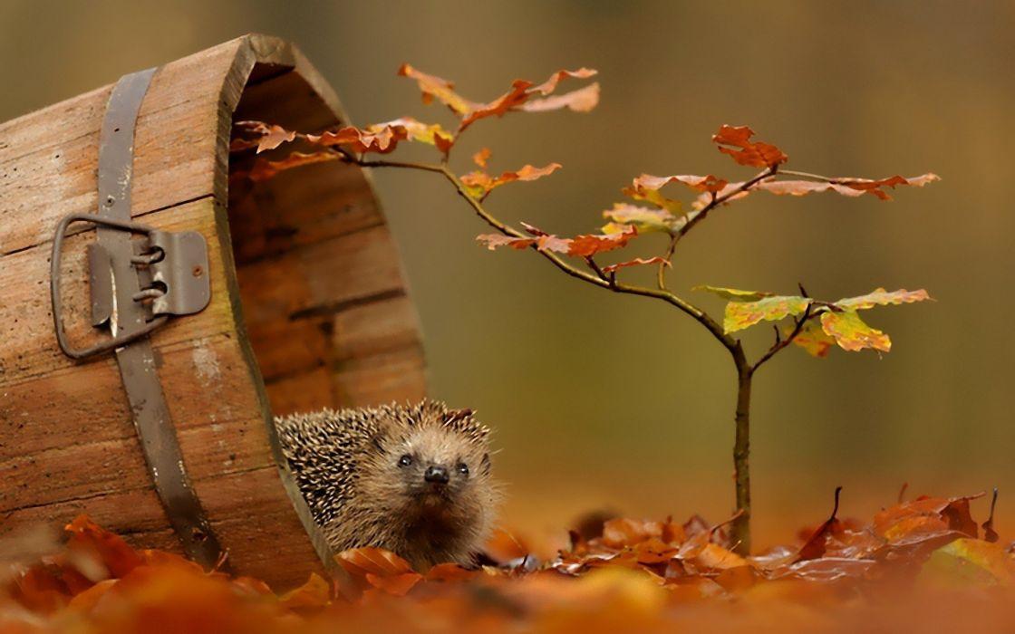 autumn animals wildlife wallpaper