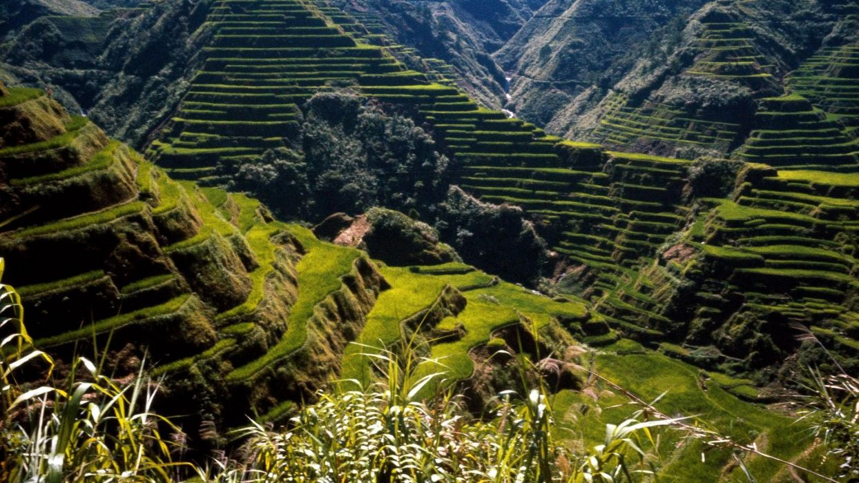 rice Philippines Asia ancient terraces wallpaper