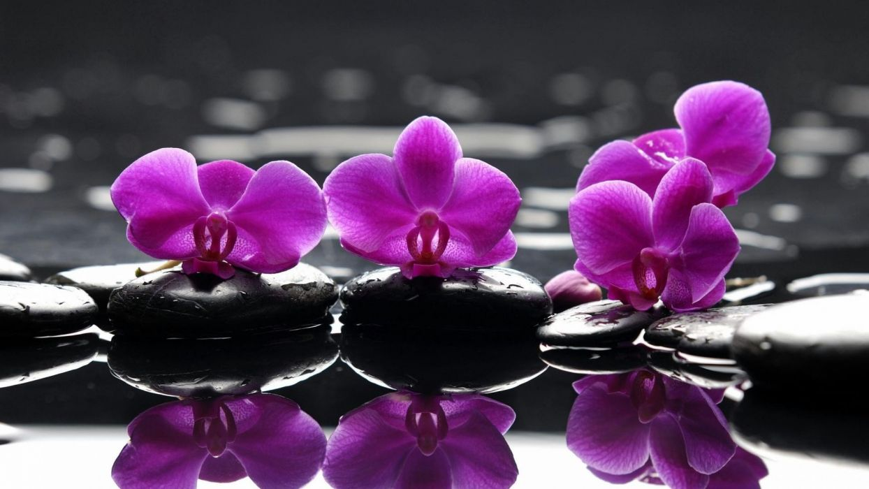 water flowers stones selective coloring reflections orchids pink flowers wallpaper
