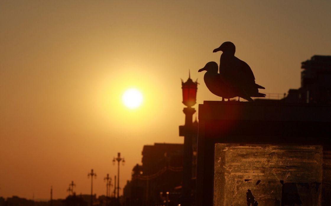 sunset birds silhouettes bridges urban seagulls Brighton wallpaper