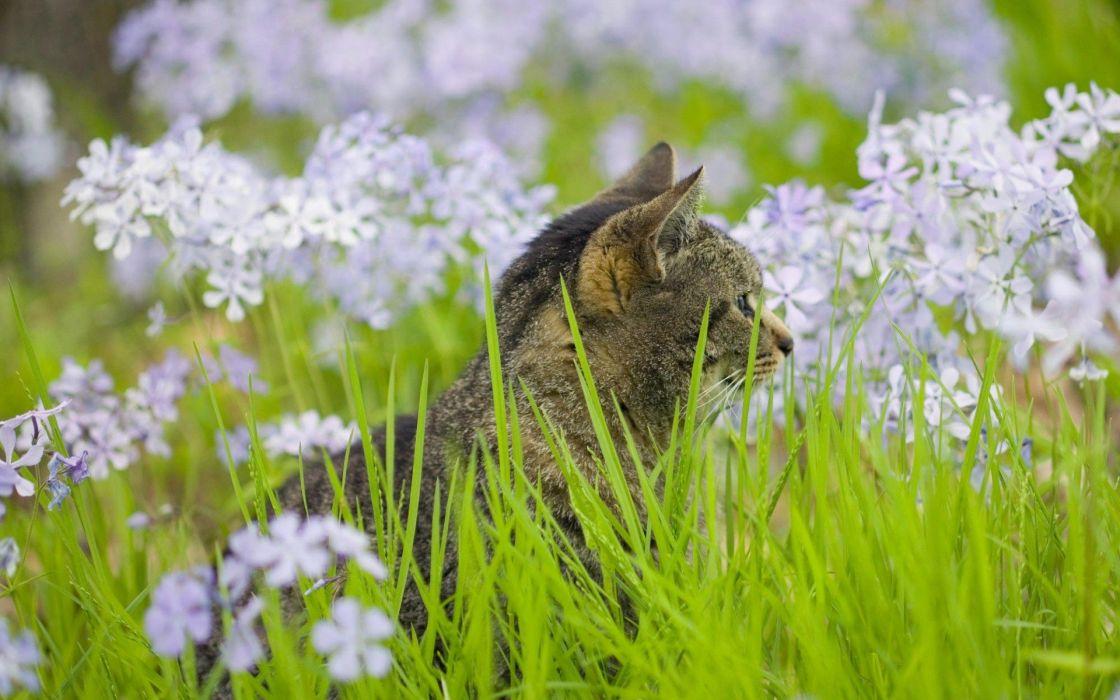 flowers cats natural wallpaper
