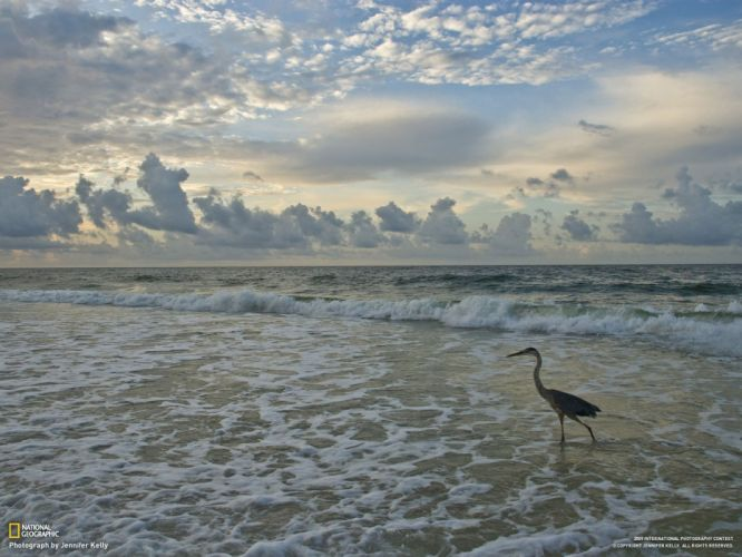 birds waves National Geographic skyscapes sea wallpaper