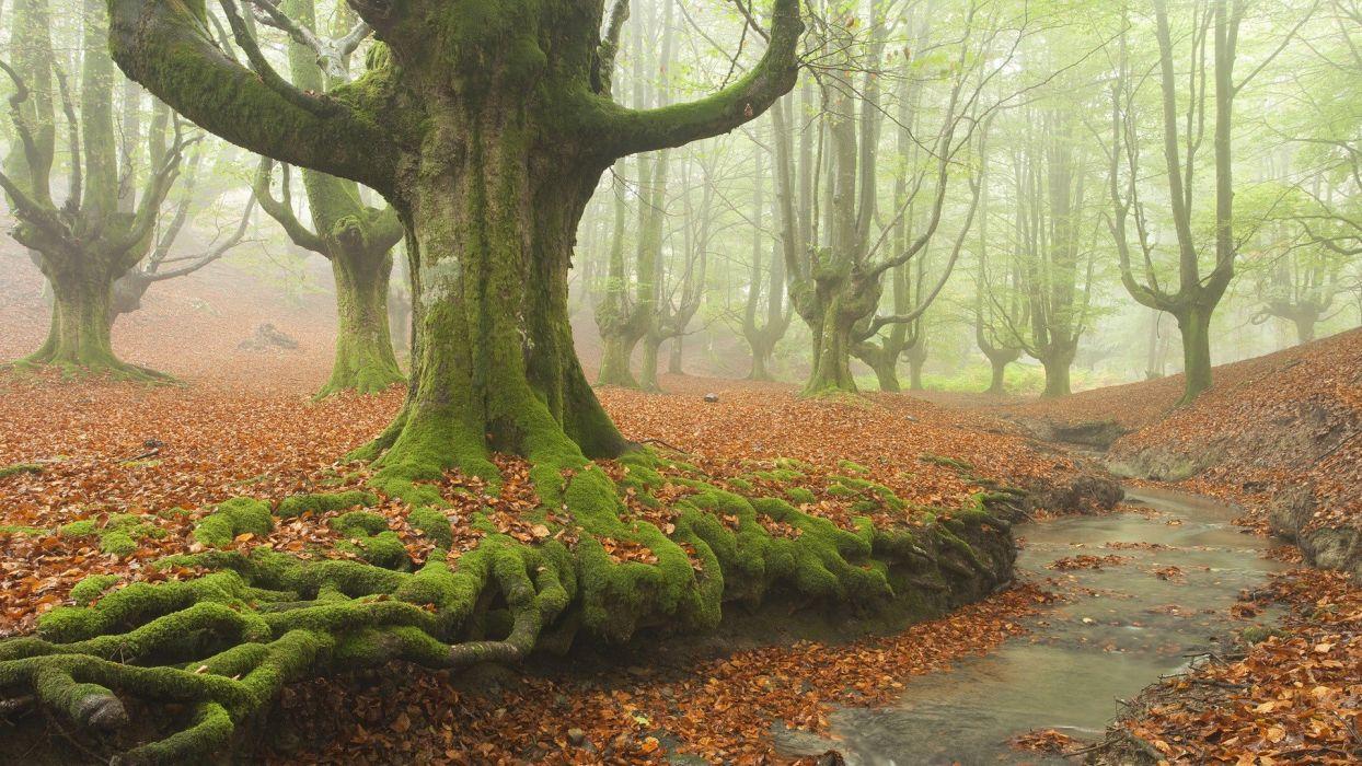 Spain moss roots wallpaper