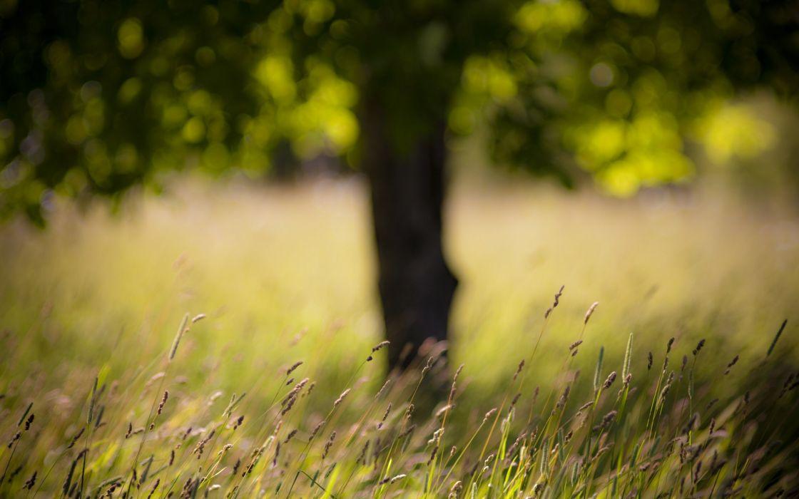 landscapes nature grass summer wallpaper
