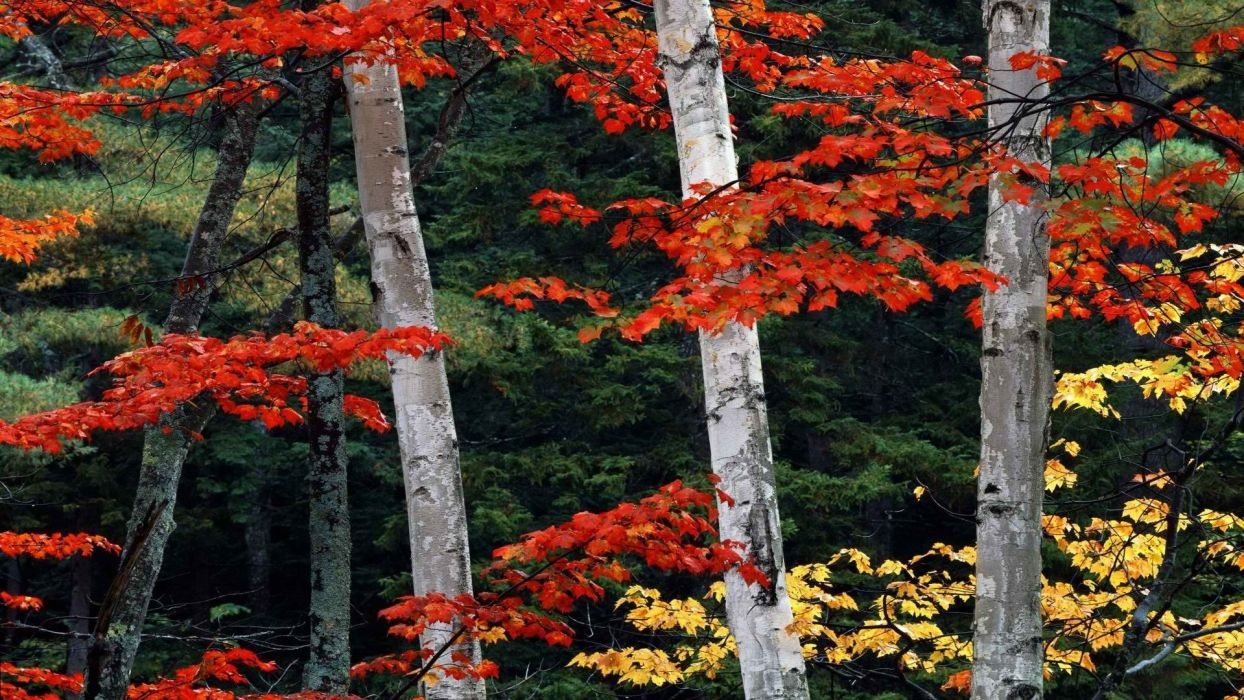mountains autumn white forests national wallpaper