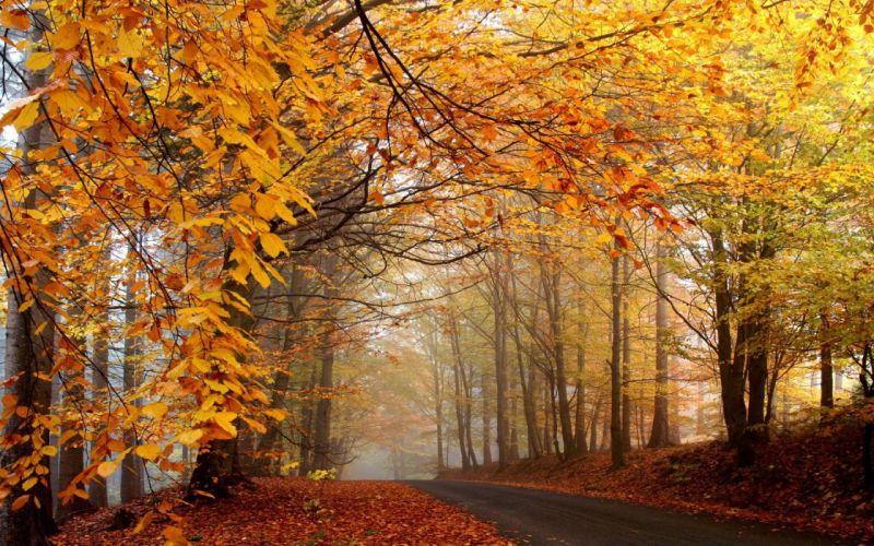 trees autumn leaves roads fallen leaves wallpaper