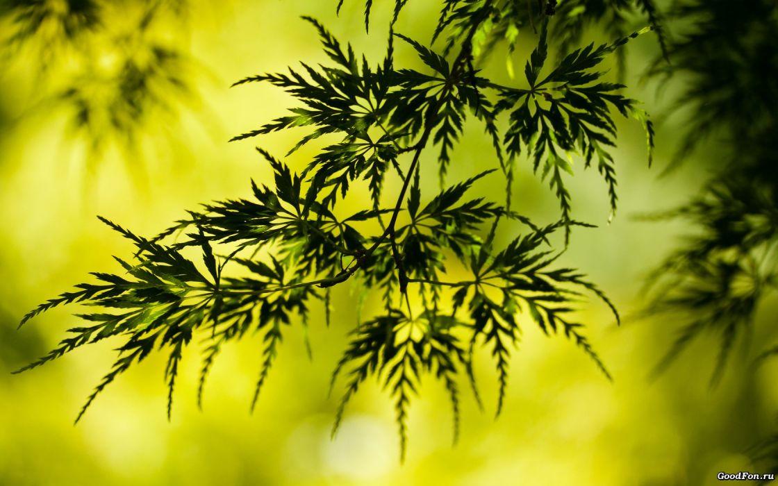nature leaves plants bokeh wallpaper