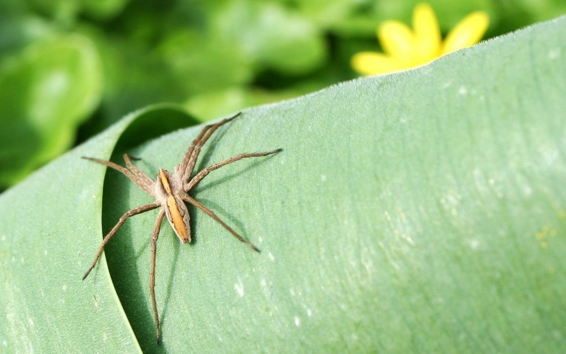nature animals insects leaves plants spiders wallpaper