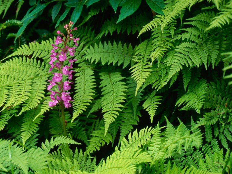 nature flowers leaves ferns orchids wallpaper