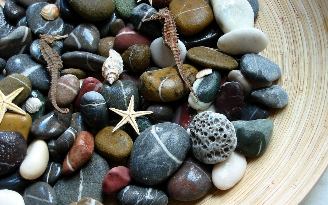 stones shells starfish seahorses macro decor wallpaper