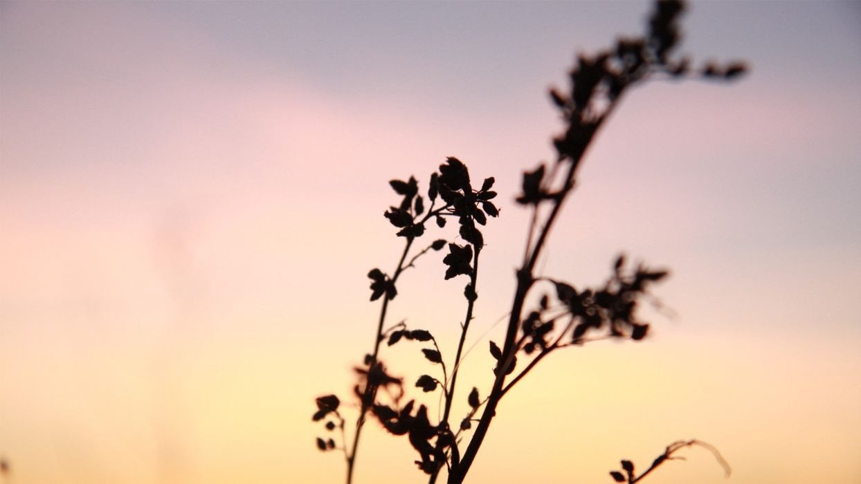 sunset nature silhouettes wallpaper