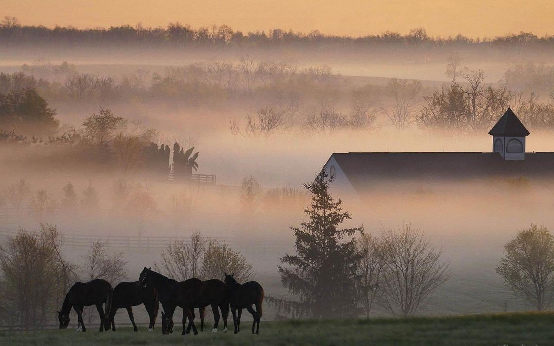 nature mist wallpaper