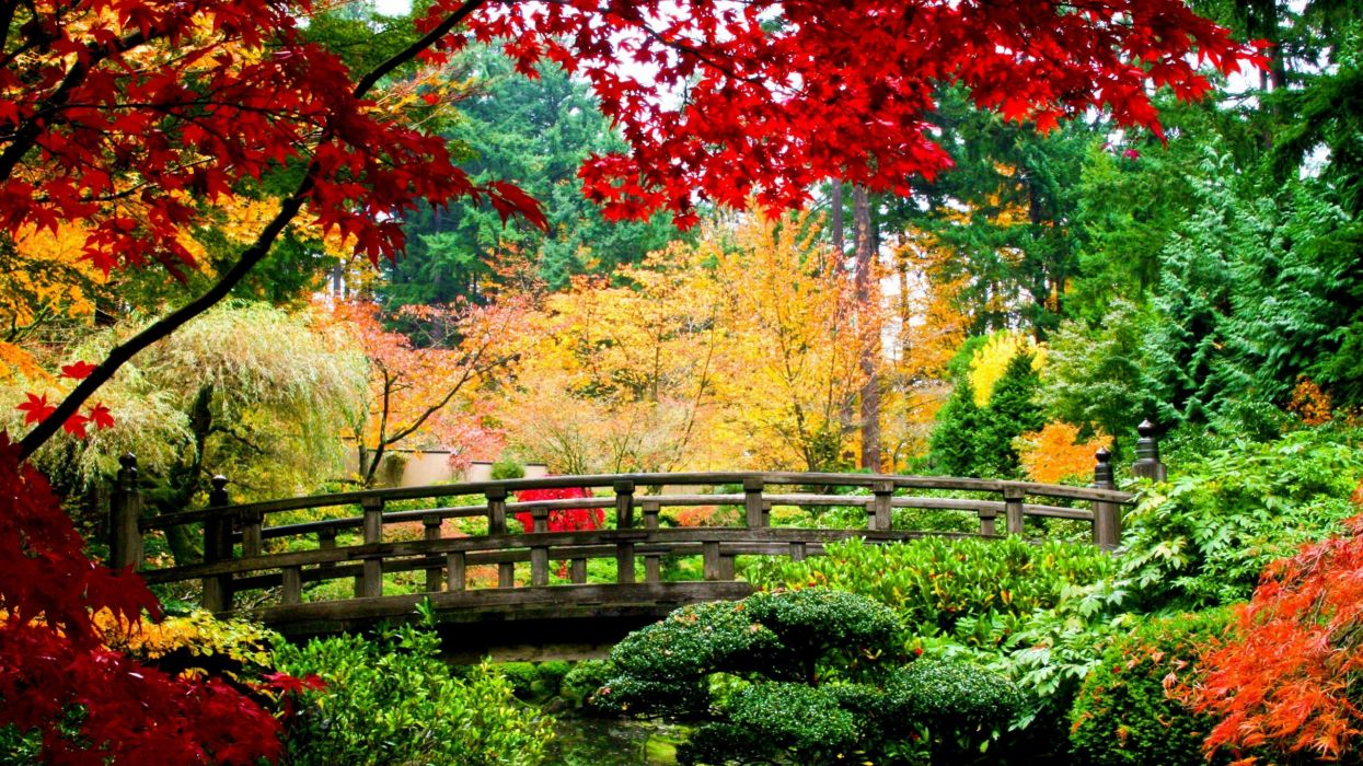 water nature trees autumn multicolor flowers China leaves bridges plants rivers branches wallpaper