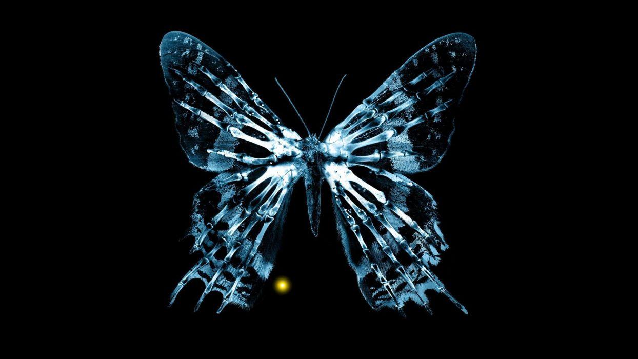 Fringe butterflies wallpaper