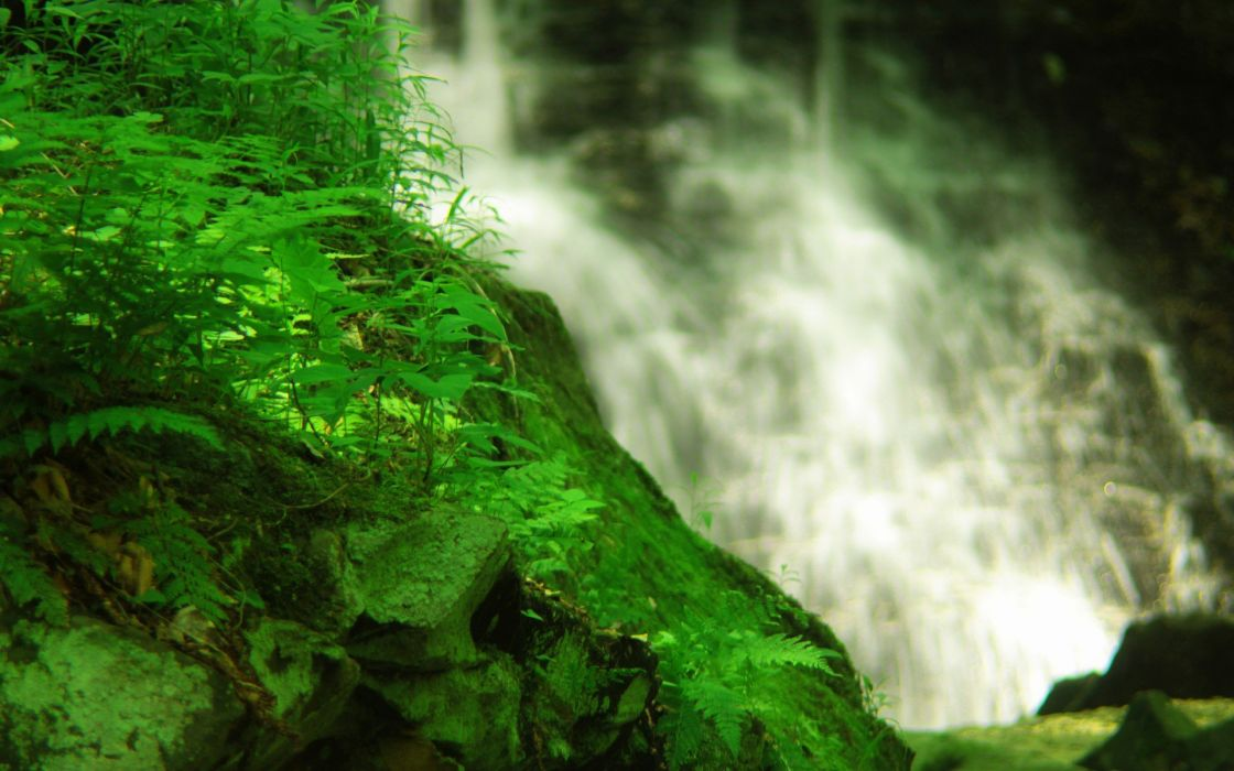 forests plants waterfalls wallpaper