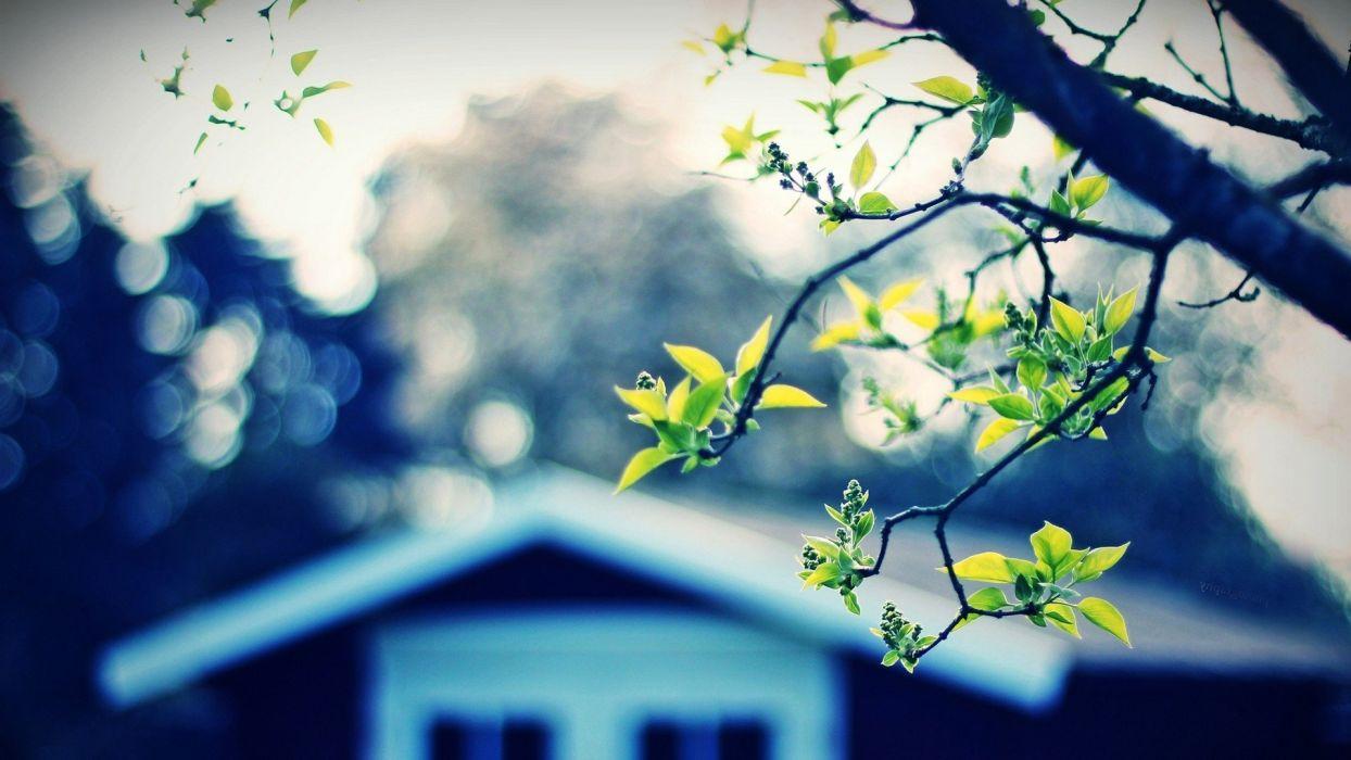 trees houses wallpaper