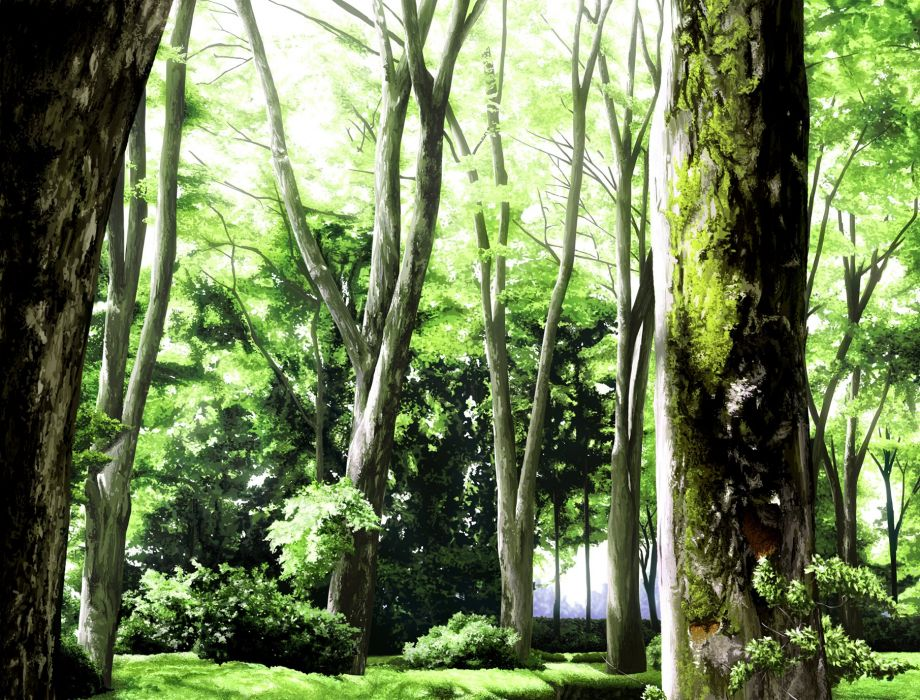 original chan inpashi forest nobody original scenic tree wallpaper