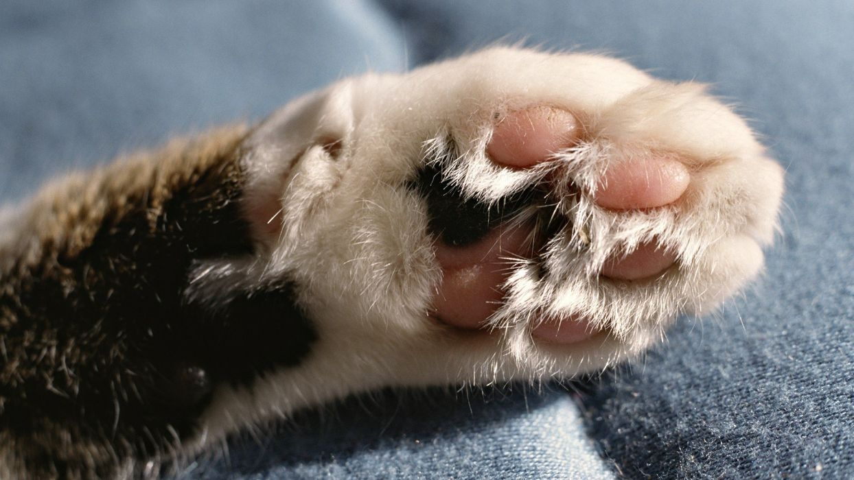 cats paws wallpaper