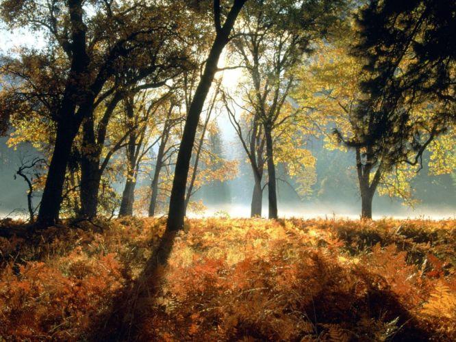 trees leaves sunlight wallpaper