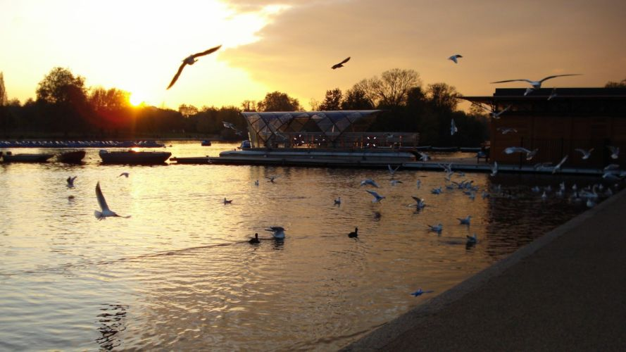 sunset seagulls wallpaper