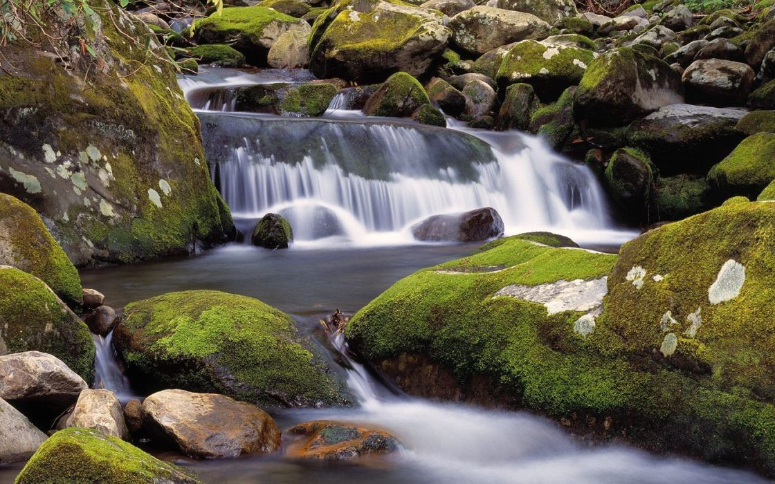 landscapes nature rocks Tennessee moss forks Great Smoky Mountains wallpaper