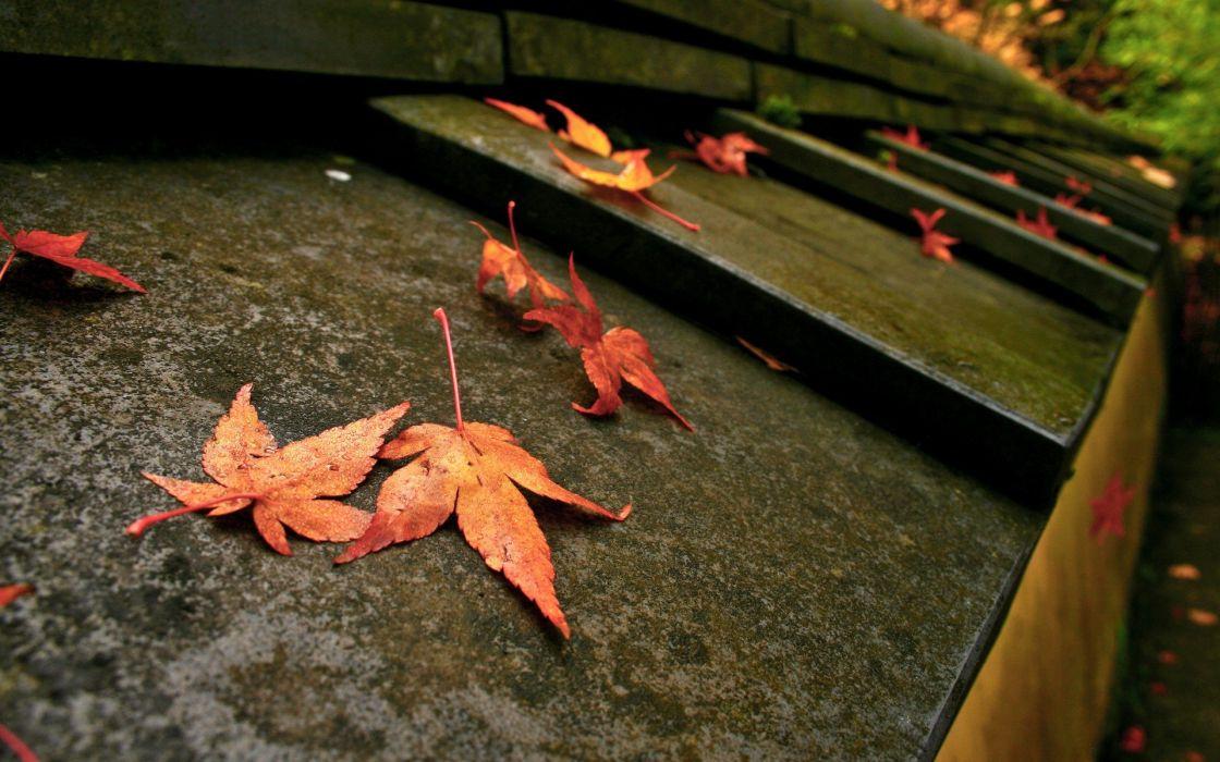 stairways macro fallen leaves wallpaper