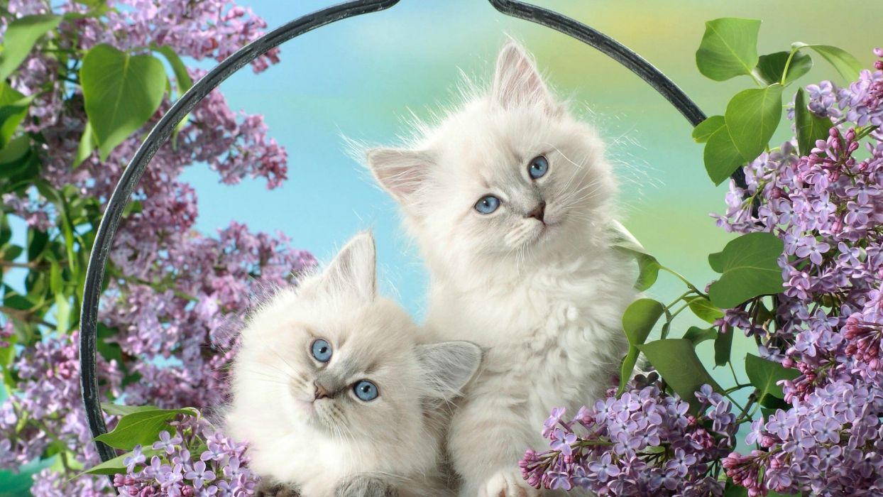cats animals cubs feline kittens baskets pets domestic cat wallpaper