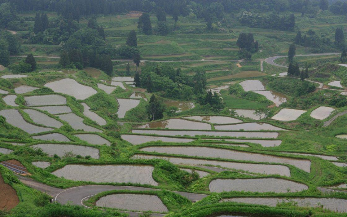 Japan landscapes rice wallpaper