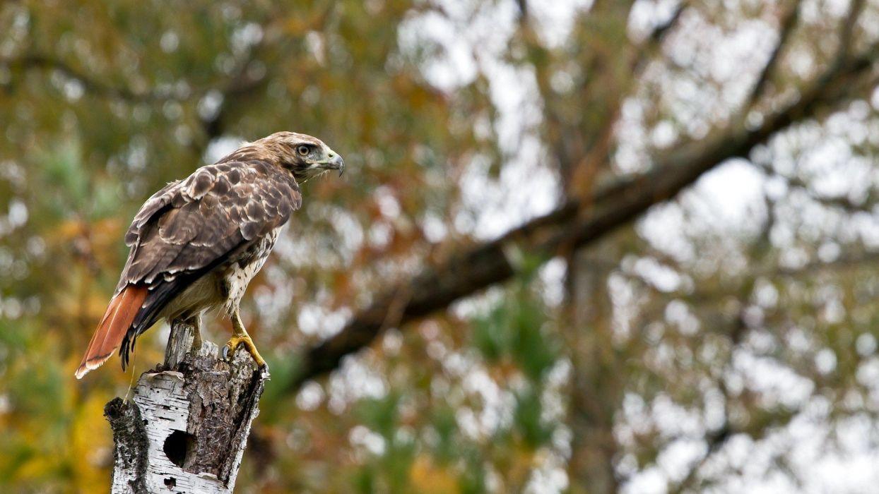 birds branches bird of prey wallpaper