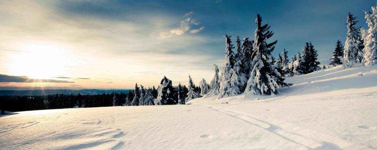 snow trees snow landscapes wallpaper
