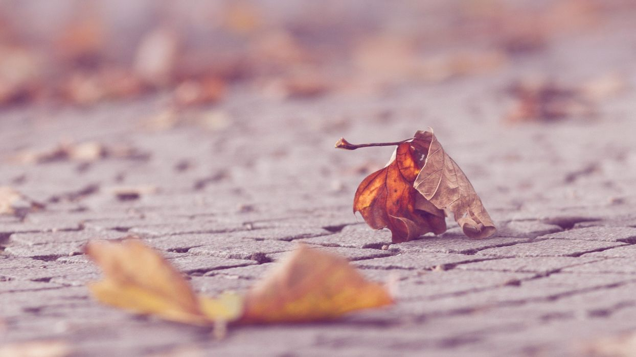 leaves depth of field wallpaper