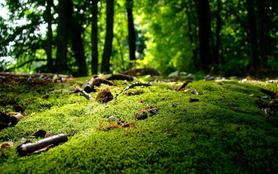 green trees forests moss wallpaper