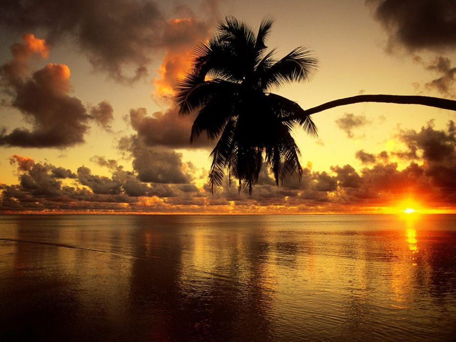sunset clouds landscapes silhouettes palm trees lakes wallpaper