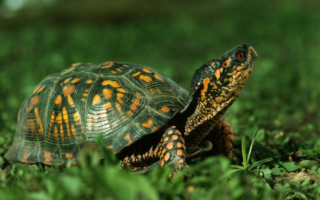 animals turtles depth of field wallpaper