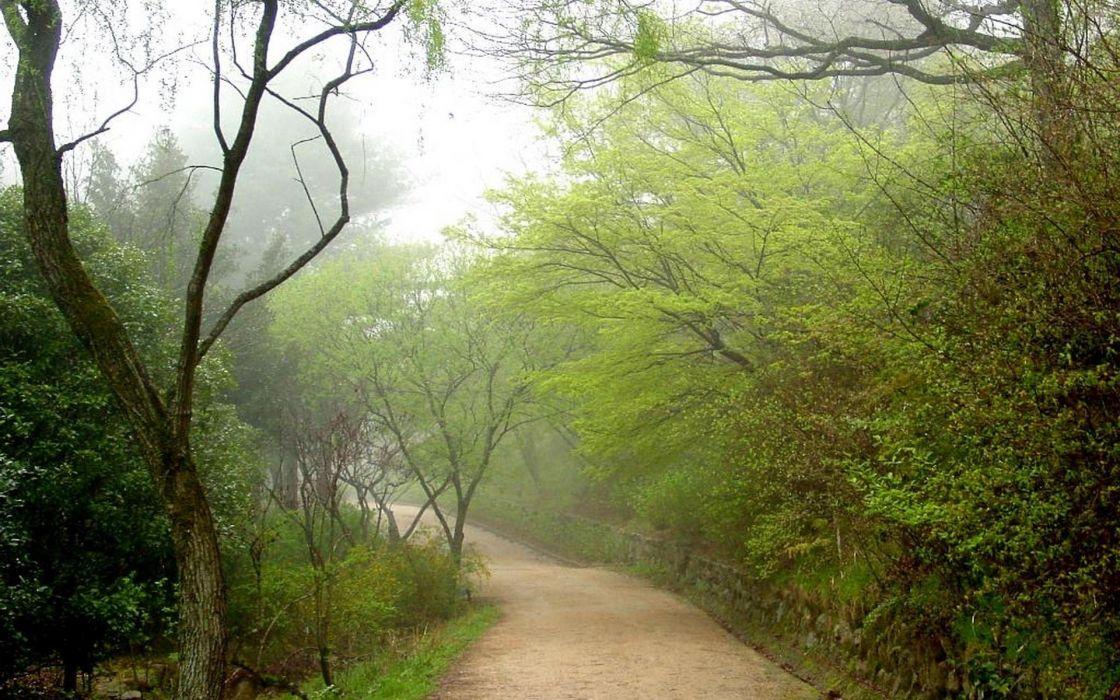 Japan landscapes trees wallpaper