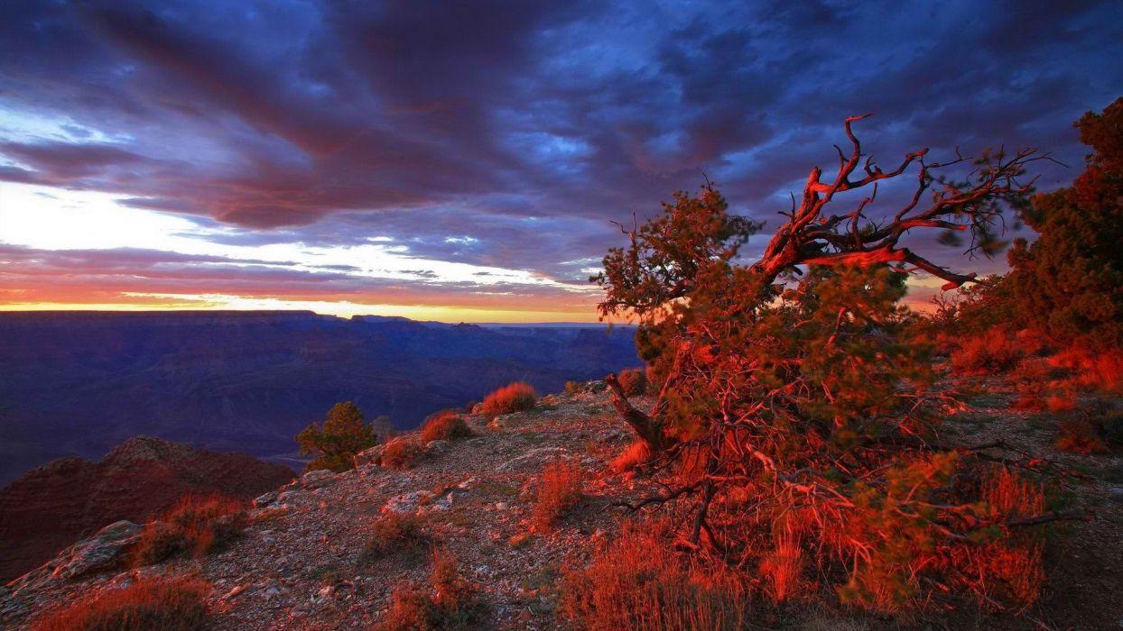sunset point USA Arizona Grand Canyon National Park bushes wallpaper