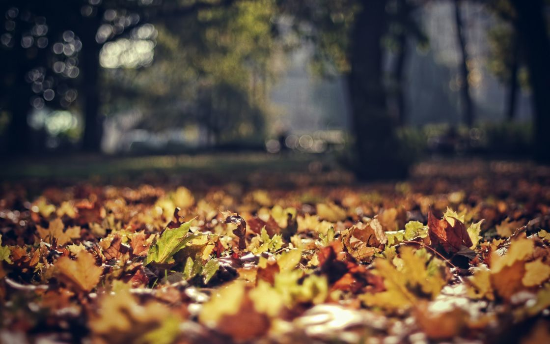nature autumn forests leaves bokeh depth of field wallpaper