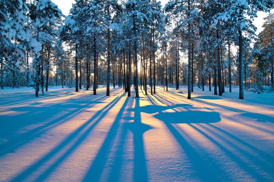 forest sunrise winter trees wallpaper