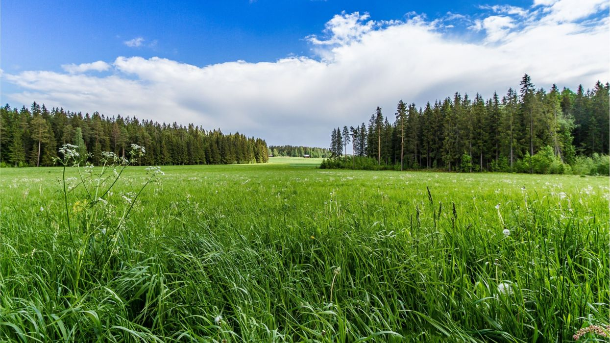meadow forest sunny grass flowers wallpaper
