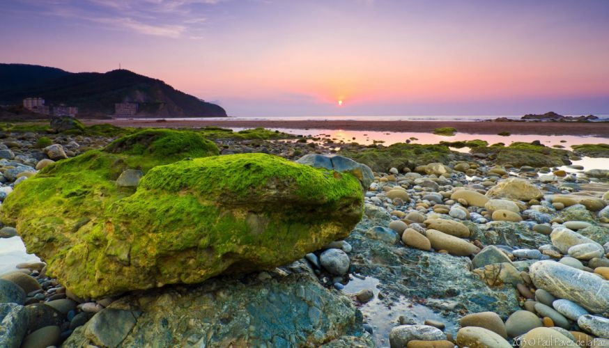morning stones seaweed sea stone wallpaper