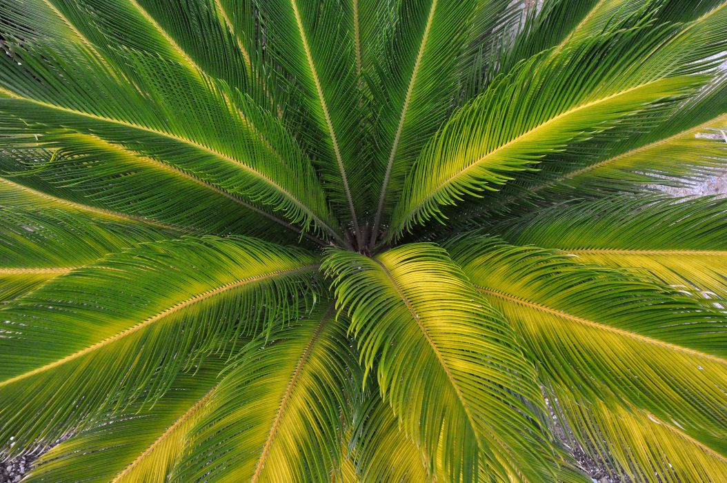 palm leaves nature wallpaper