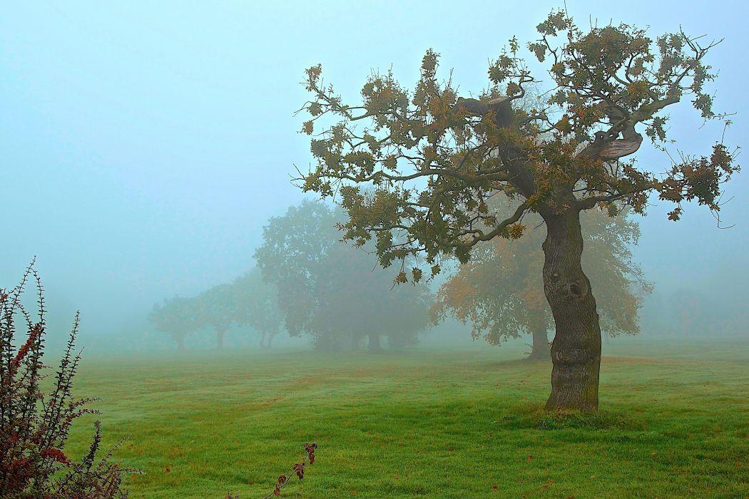 park field autumn trees fog wallpaper