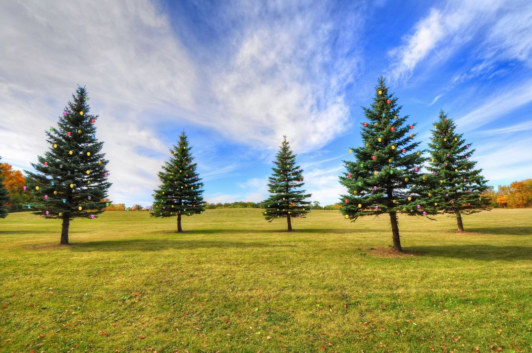 park field fir trees landscape wallpaper