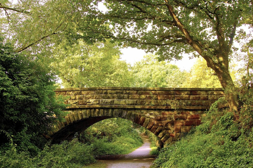 Park Forest Trees Bridge Footpath Landscape Wallpaper